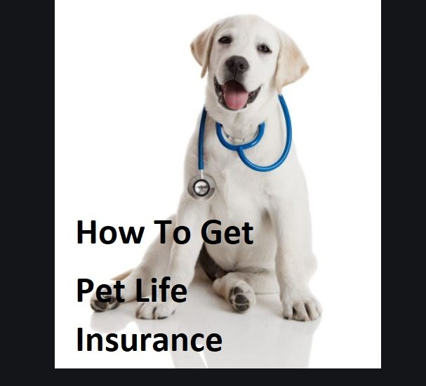How-To-Get-Pet-Life-Insurance-1
