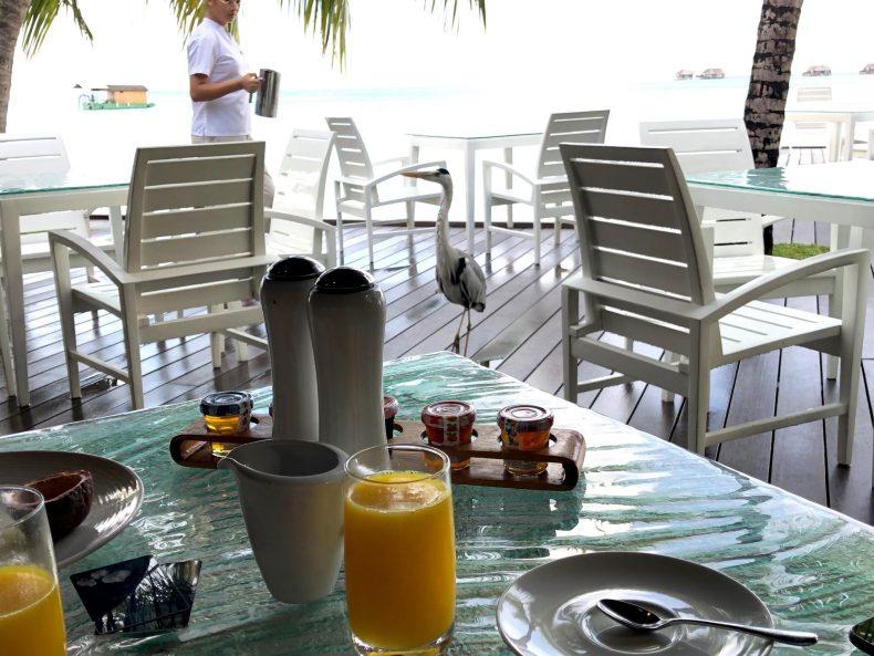 Breakfast at Vilu
