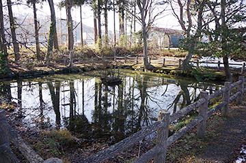 ↑北側から見た「清水池」全景。