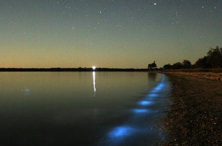 Bioluminiscenta - Lumina trupului nostru