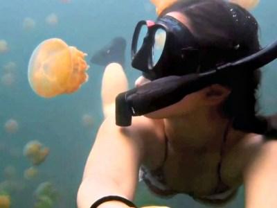 Δείτε τις θάλασσες που έχουν γεμίσει μέδουσες