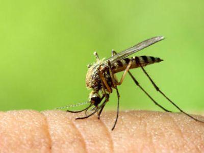Πώς να προστατευτούμε από τον ιό του Δυτικού Νείλου