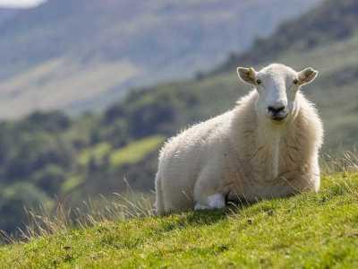 Κανονικότητα στις αντικειμενικές αξίες αγροτεμαχίων