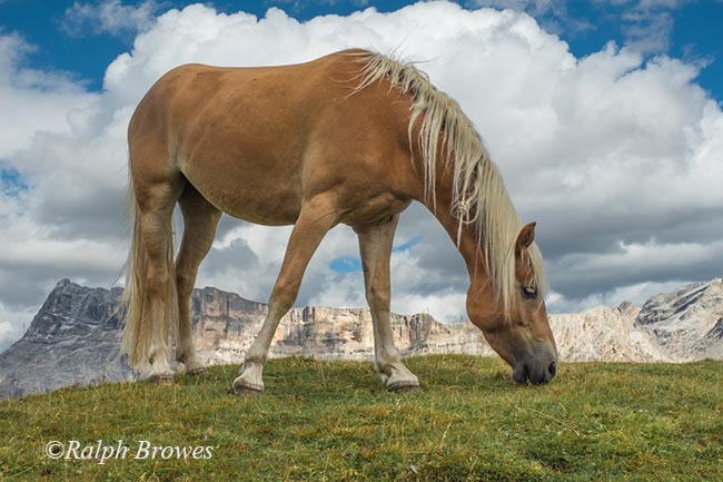 Wild Dolomites Pony_Ralph Browesweb