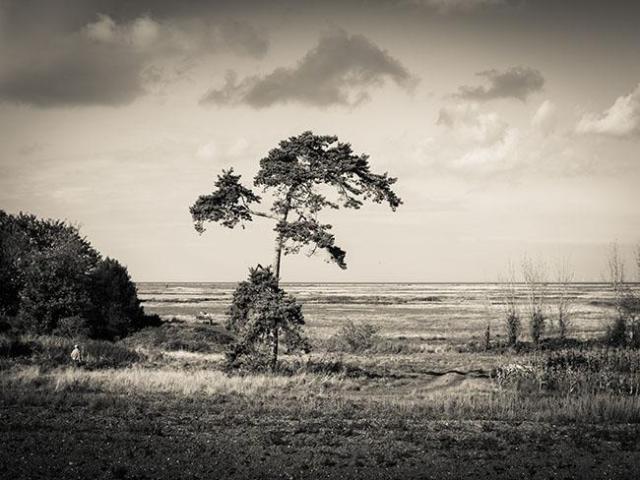 Norfolk Landscape