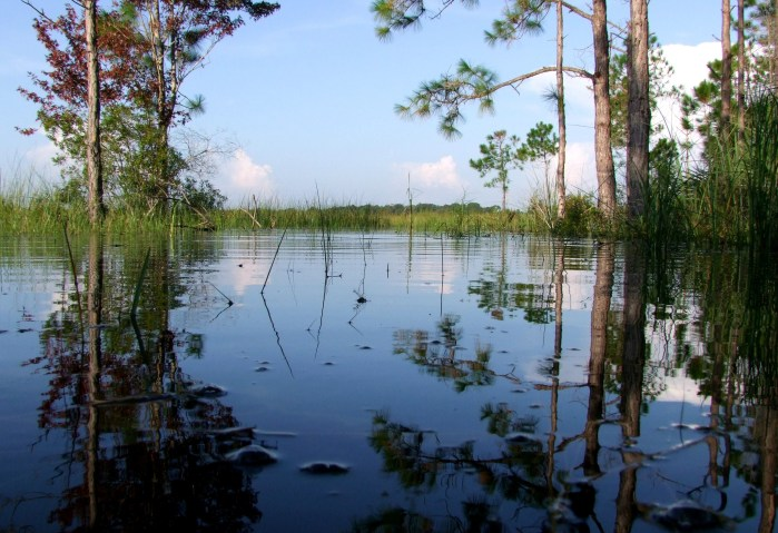 CREW marsh