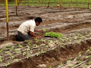 La falta de agua está afectando a los productores.  CRH.