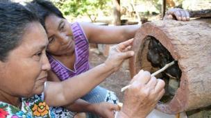 Povos Nativos Criando Abelhas sem Ferrão