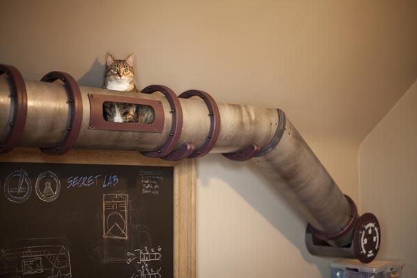 #7 - Transição para gatos dentro da casa