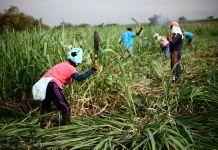 liberadores de la Madre Tierra vuelven a la parte plana del Norte del Cauca, tierras de las que fueron despojadas