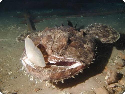 Рыбы черного моря: список рыб с описаниями, фото, видео