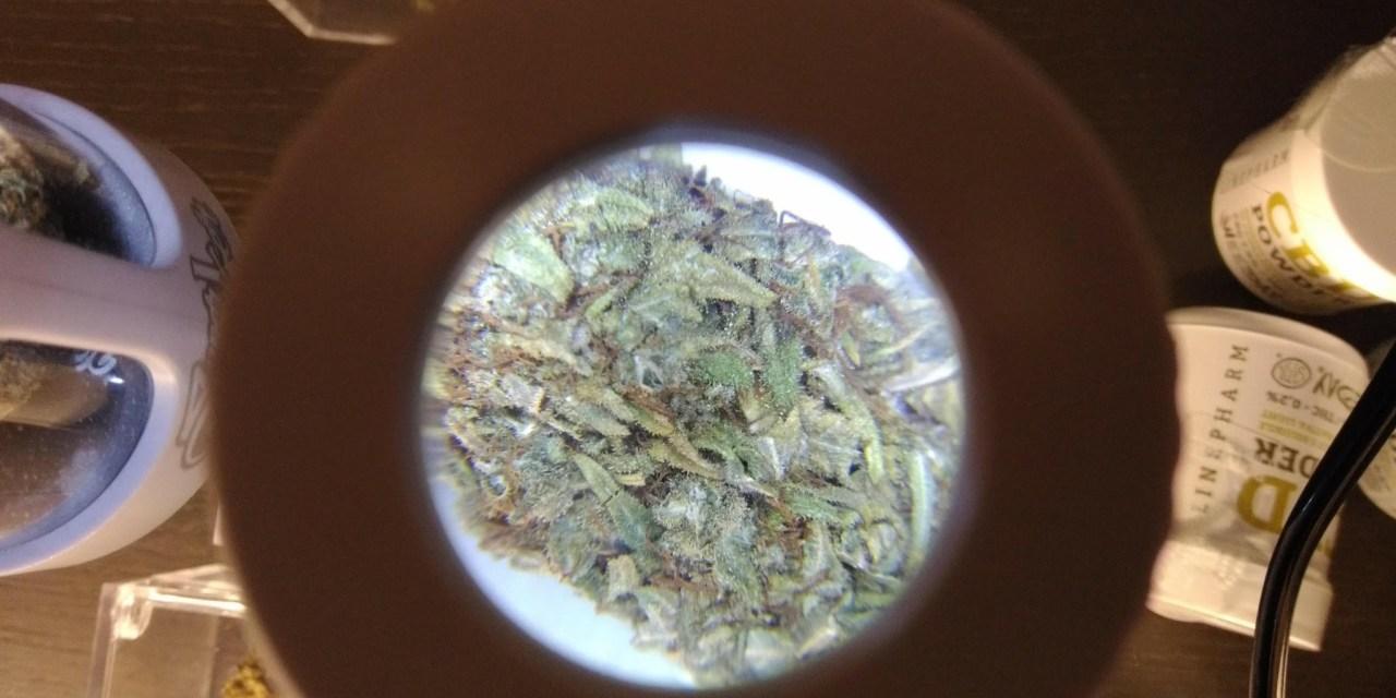 Cannabis light, la sentenza