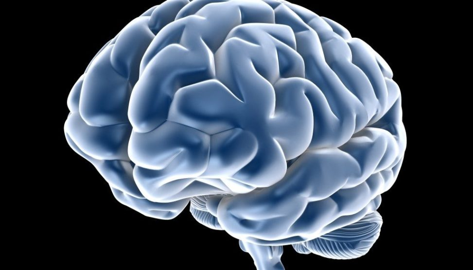 The Brain Of Serial Killers And Psychopaths Crime Traveller