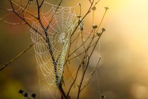 cobweb-1025021_640