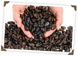 hands beans.jpg