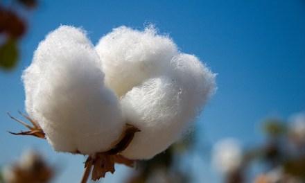 Importante empresa de algodón se une a IBM para utilizar la blockchain