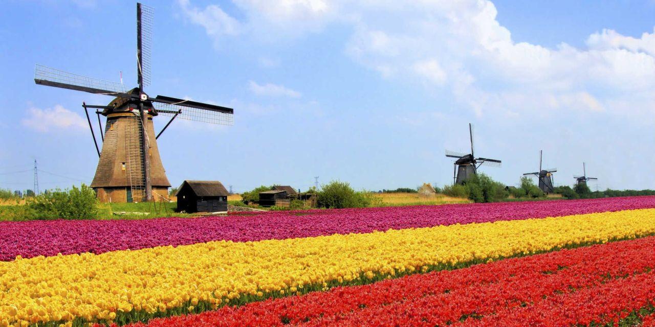 De 135 mil a 490 mil aumentó el número de familias holandesas que invierten en criptomonedas