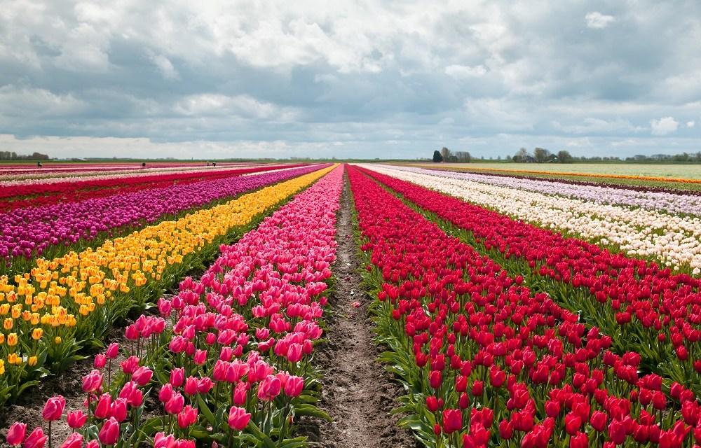 Conoce Texel, tulipanes digitales en la blockchain