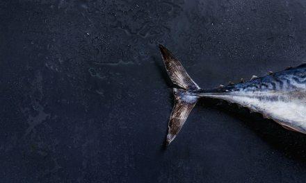 Blockchain de SAP rastreará recorrido del atún desde Indonesia a EE.UU.