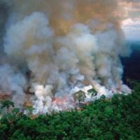 En medio del incendio en el Amazonas Bitpay bloqueó una donación de USD100.000 en bitcoin a organización sin fines de lucro