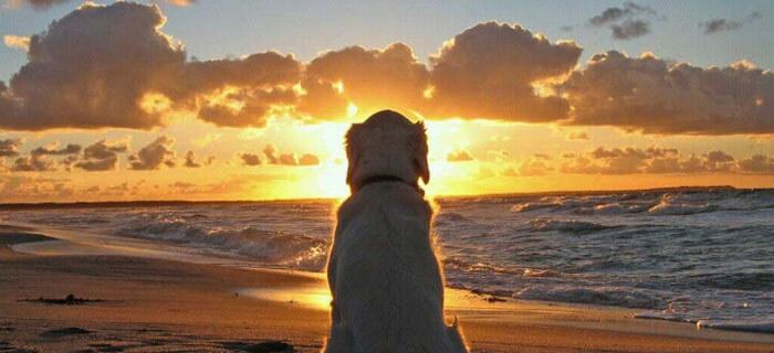 ¿A donde van nuestras mascotas cuando mueren?