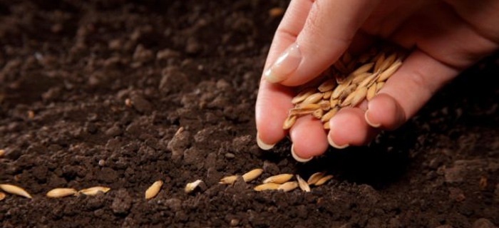 REFLEXIÓN: Sembrar la semilla