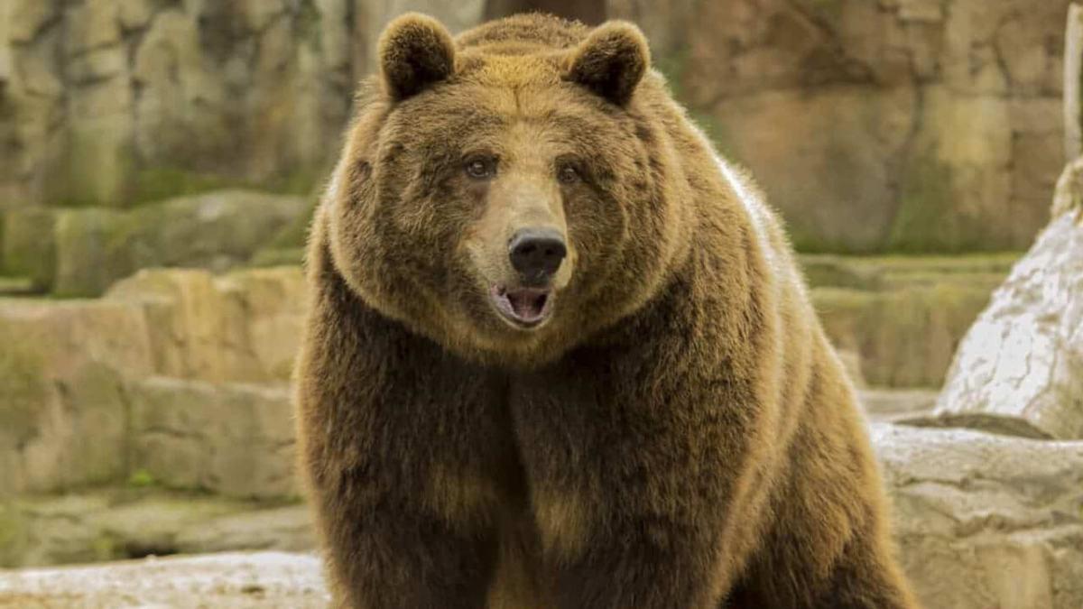 """Reflexión: Me siento débil aunque """"soy un oso"""""""