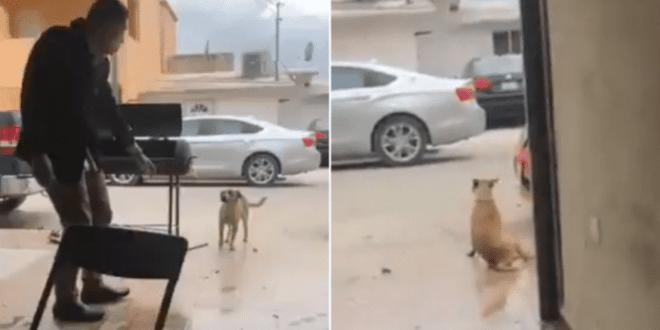 "Sujeto apuñaló a perro que buscaba alimento; ""no se murió"" dijo"
