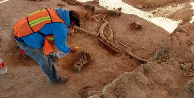 Encuentran mamuts en Santa Lucía; no frenan obras