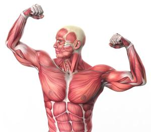 muscle flex - #1 Exercise That Eliminates Joint & Back Pain, De-Stresses Your Body & Makes You Feel Younger