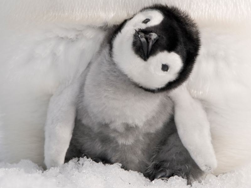 Image result for baby penguin