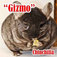 Gizmo_1