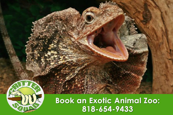 an Exotic Animal Zoo
