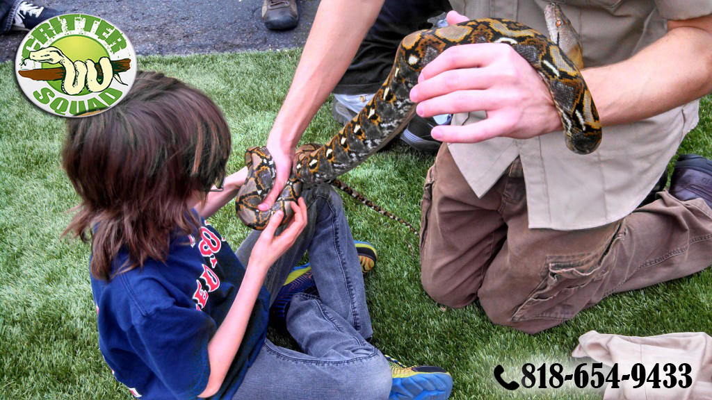 A Little Reptile Zoo to Bring Smiles to an Event