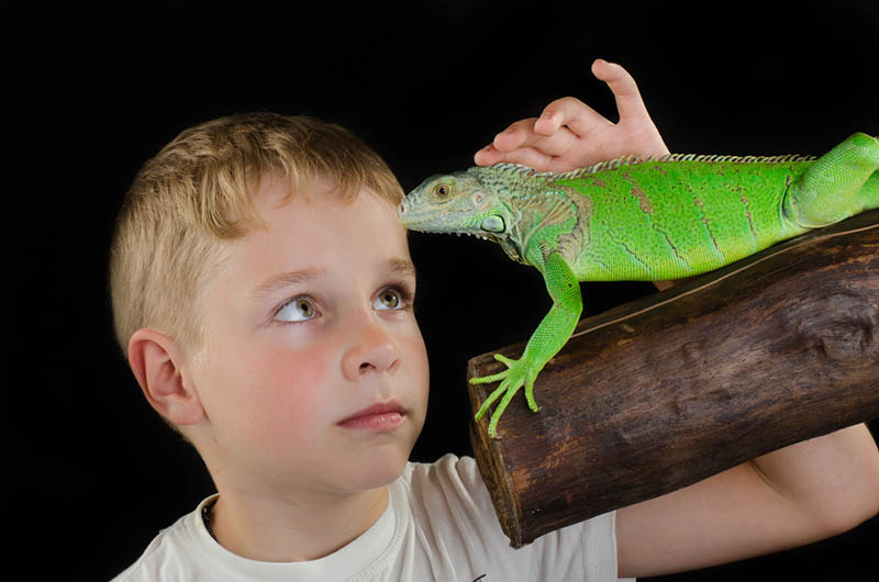 Where to See Exotic Reptiles in Los Angeles Up Close