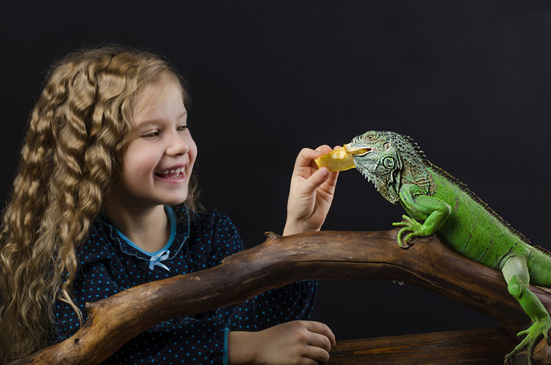 Where to Shop for Reptile Party Supplies