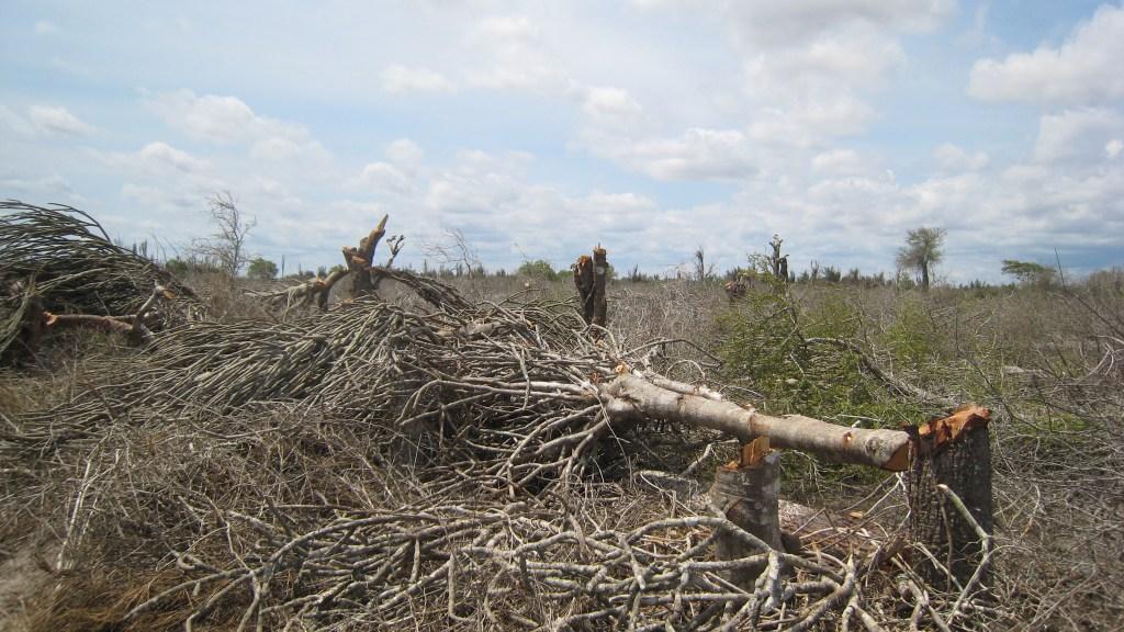 Madagascar spiny forest destruction