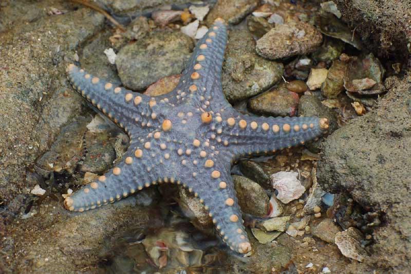 Starfish  (paulshaffner)