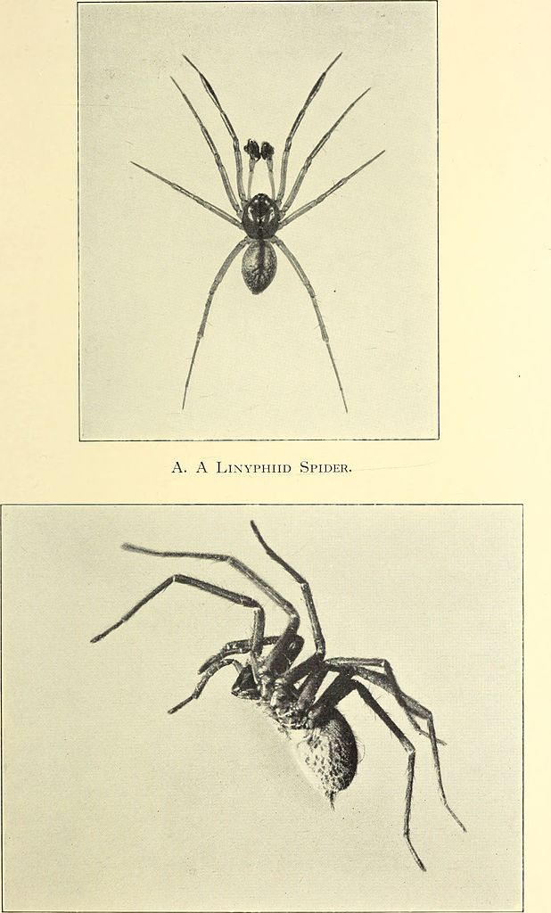 The biology of spiders () ()