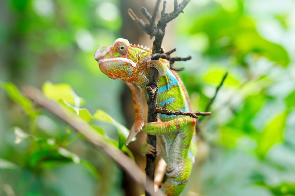 Seeing Exotic Reptiles in Los Angeles is Easier Than You Think