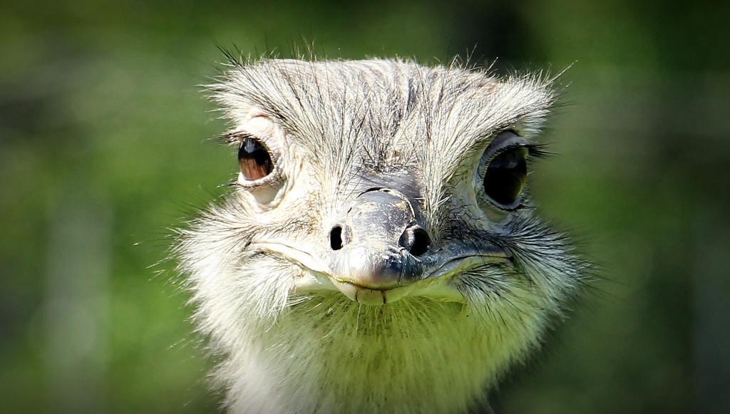 animal beak bird