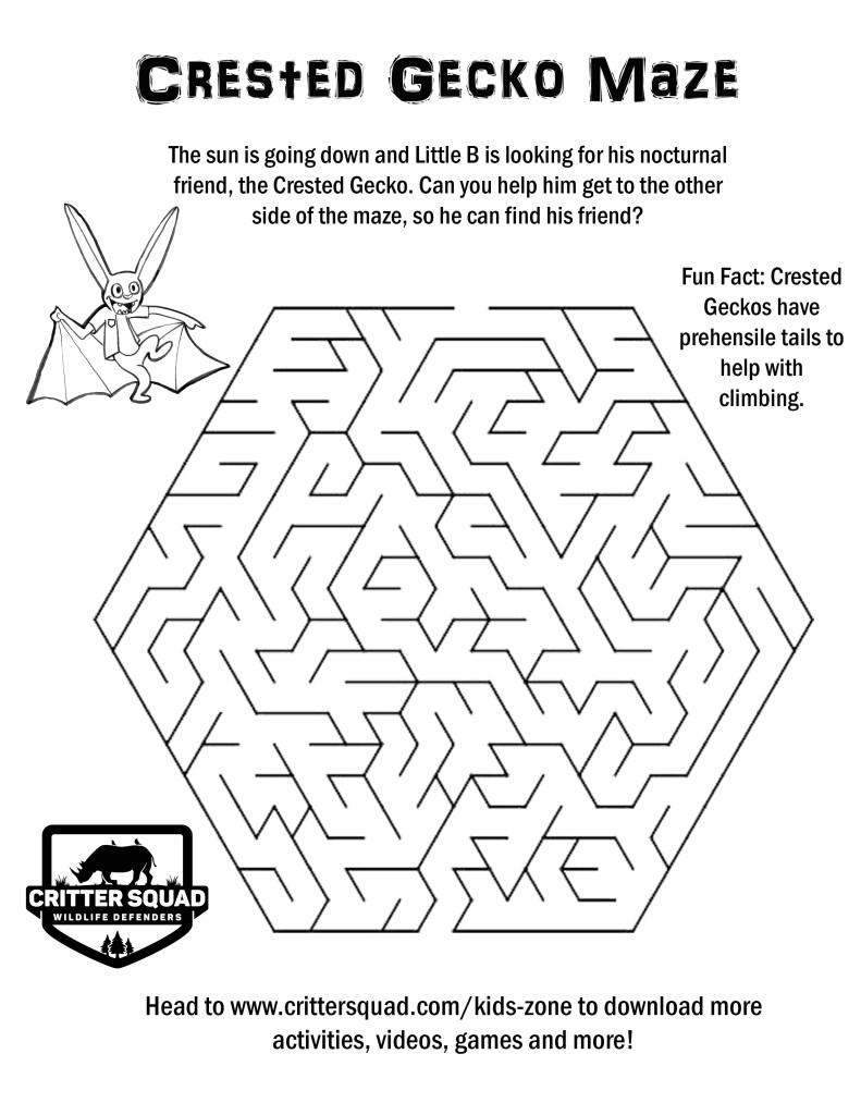 crested gecko maze