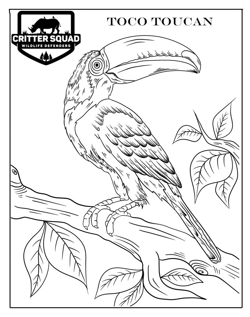 bird coloring pages  c.s.w.d