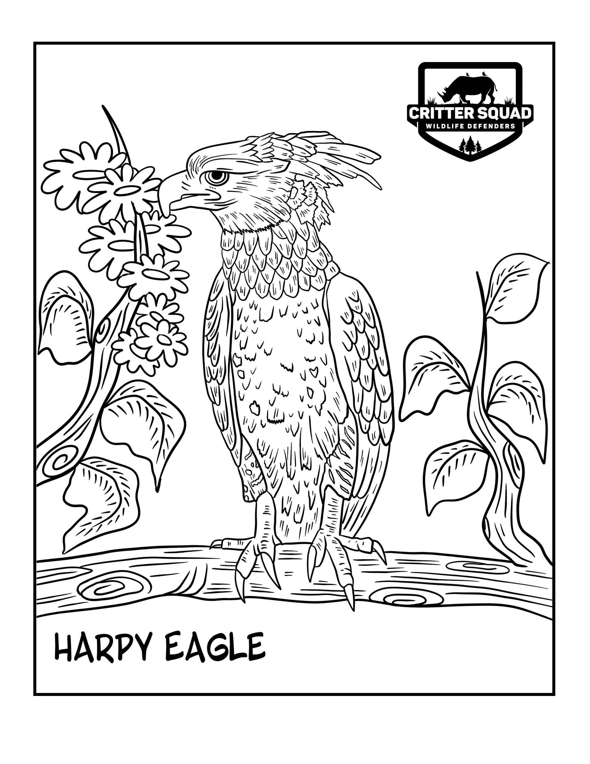 Harpy Eagle Coloring Page C S W D