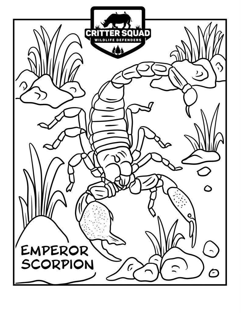emperor scorpion coloring page c s w d emperor scorpion coloring page c s w d