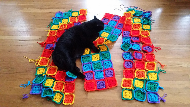 cat crochet inspection