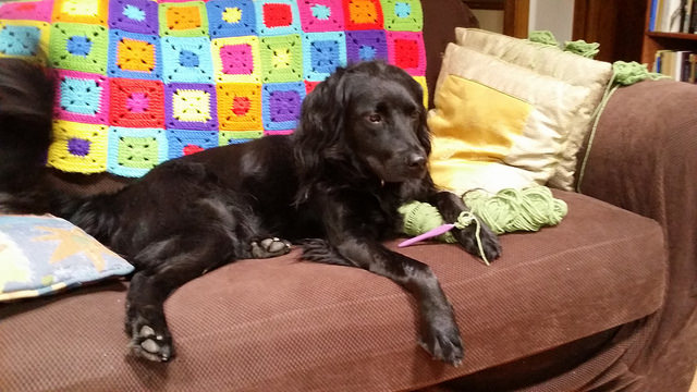 My dog Clooney overseeing my crochet project