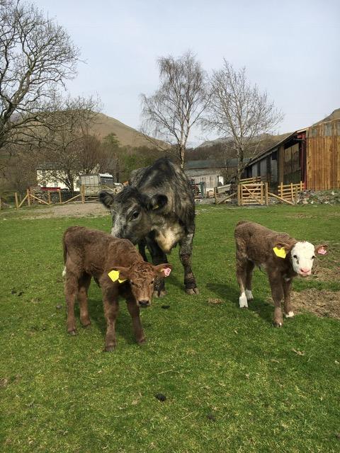 births photo 2