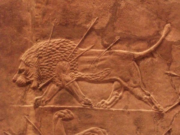 leona-herida