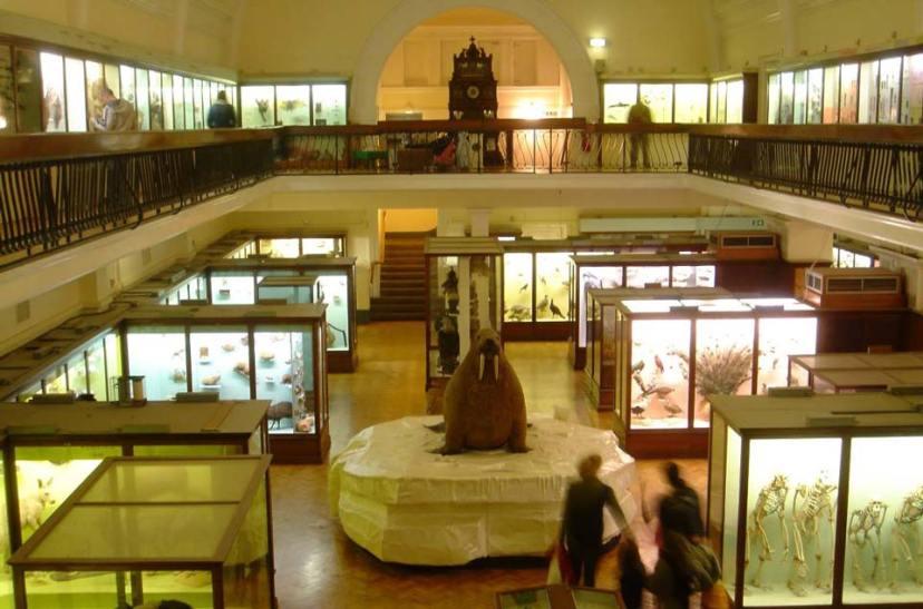 interior-horniman-museum